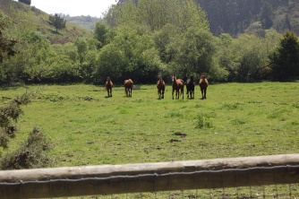Horses checking us out