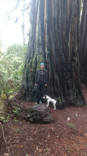 Hike among huge, oldgrowth redwood trees