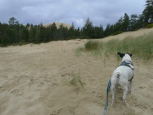 Monte taking in the views of the dunes.